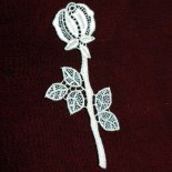 Motiv Weiße Rose